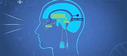 Sleep Melatonin Hormone Therapy Tech Daily Hypothalamus