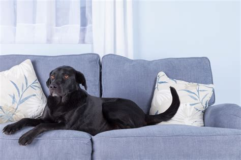 tips  choosing pet friendly furniture