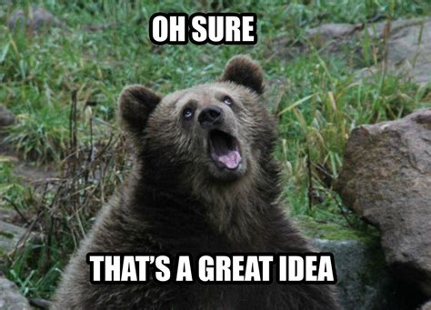 Funny Bear Meme - 30 funny animal captions part 4 30 pics amazing creatures