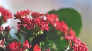 Beautiful, Red, Flowers, Wallpapers