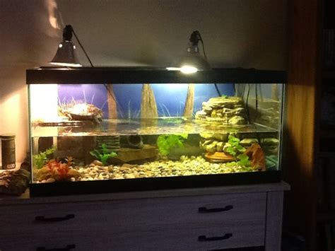 Basking L Pets At Home by 17 Best Ideas About Turtle Tanks On Turtle
