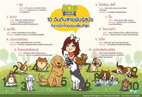Dog: 10 อันดับสายพันธุ์สุนัขที่นิยมเลี้ยง