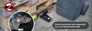 Ratten In Der Wand : ratten falle mit integriertem langzeitk der gardigo ~ Yasmunasinghe.com Haus und Dekorationen