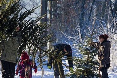 utah christmas tree permits st george news southern utah s premier free local news stgnews