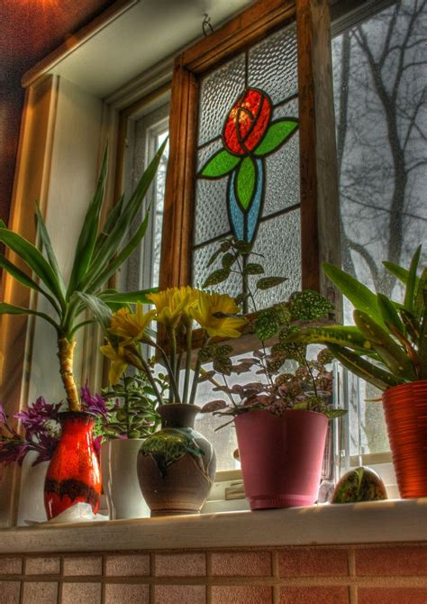 Small Window Plants by 60 Best Images About Creative Window Treatments On