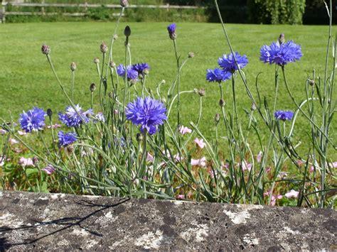 terrazzo piante piante in terrazzo piante da terrazzo
