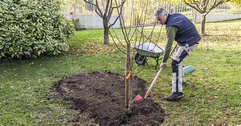 Obstbäume Richtig Pflanzen