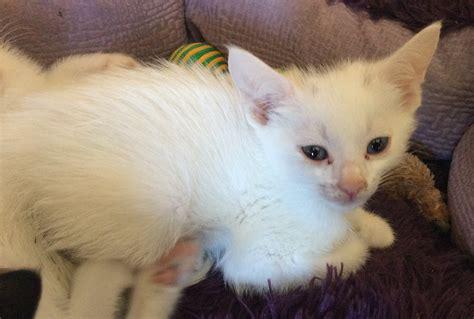 Nova Cat Clinic Arlington Va Animal Hospital Ask Ellen