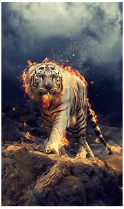 Download 2560x1600 wallpaper angry, raging, white tiger ...
