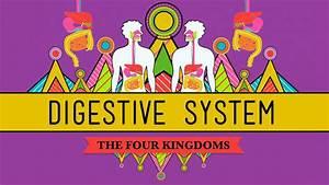 The Digestive System Crashcourse Biology 28 Youtube