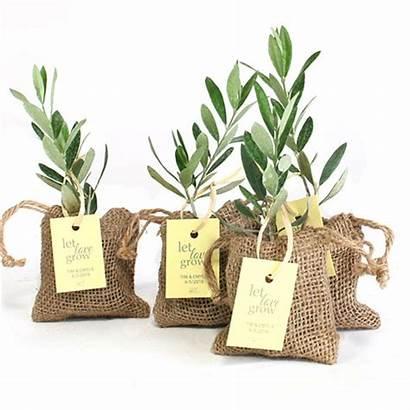 Olive Favors Tree Plant Favor Burlap Shower