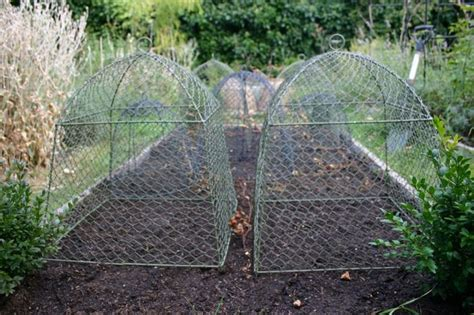 Chicken Wire Cloches  How Does Your Garden Grow