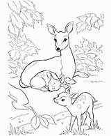 Coloring Deer Pages Printable Colouring Popular sketch template