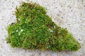 Basteln Mit Moos : herz aus moos basteln pinterest moos herzchen und naturmaterialien ~ Watch28wear.com Haus und Dekorationen