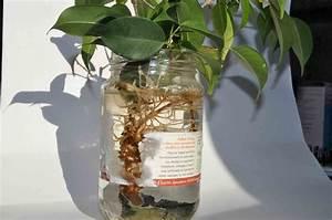 Comment Tailler Un Ficus : r sultat de recherche d 39 images pour comment faire un ~ Melissatoandfro.com Idées de Décoration