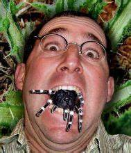 HOLY MOTHER OF GOD - Gargantuan Man-Eating SPIDER in my ...