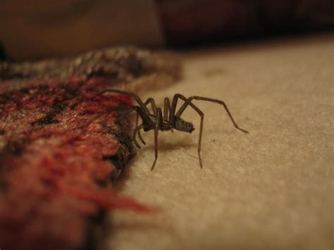 natural methods     rid  spiders heres