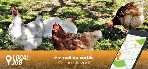 allevare animali da cortile allevare gli animali da cortile un nostalgico ritorno