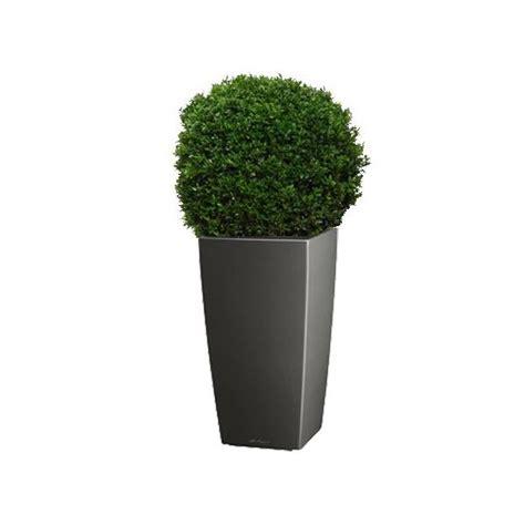buis boule 40 45 cm rempot 233 dans pot lechuza cubico anthracite plantes et jardins