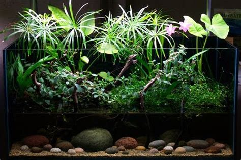 dutch planted aquarium aquascape aquarium freshwater