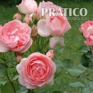 Comment Tailler Les Orchidées Pour Qu Elles Refleurissent : comment tailler les rosiers grandiflora floribunda et ~ Melissatoandfro.com Idées de Décoration