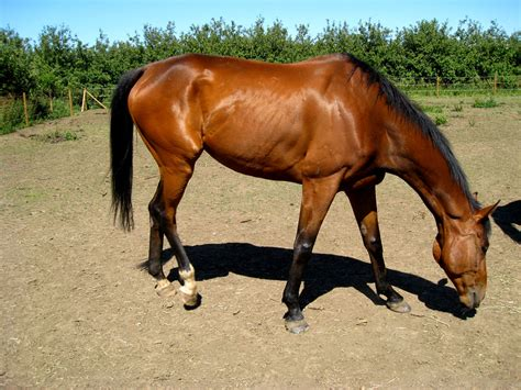 horse healthy five shiny looking tips help equestrian complacent evangelizing pony diet stallion know