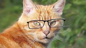 Malzpaste Für Katzen : videos f r katzen zum spielen katze fernsehen katze beobachten v gel youtube ~ Orissabook.com Haus und Dekorationen