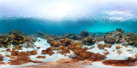 Great Barrier Reef: Insane technology is stopping coral bleaching