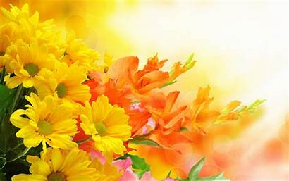 Flowers Yellow Resolution Wallpapers Orange Desktop 4k
