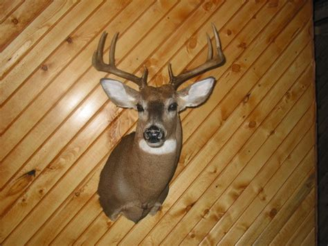 How Much Does It Cost To Mount A Deer Head?