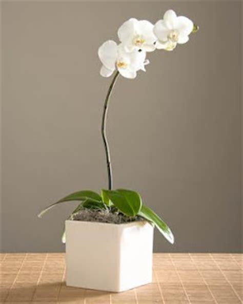 Wedding Ideas Phalaenopsis White Orchid Centerpieces