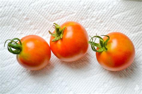 Windowsill Tomatoes by Summer Garden Harvest Sneak Peek Of Pub Shed