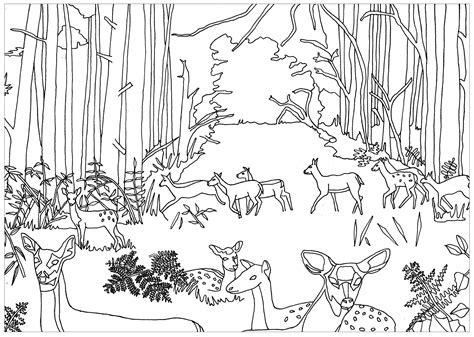 forest coloring pages forest coloring pages coloringsuite