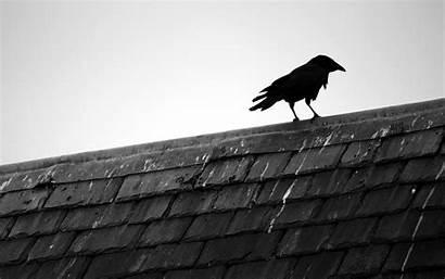 Raven Bird Background Birds Wallpapersafari Rooftops Animals