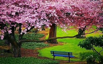 Blossom Cherry Flowers Pink Tree Computer Season