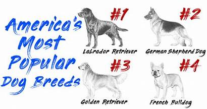 Dog Popular Breeds