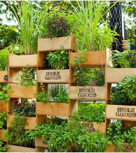 Vertical Vegetable Garden by Vertical Vegetable Garden Idea Roomy