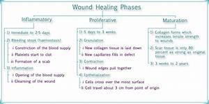 Essentials Of Wound Healing