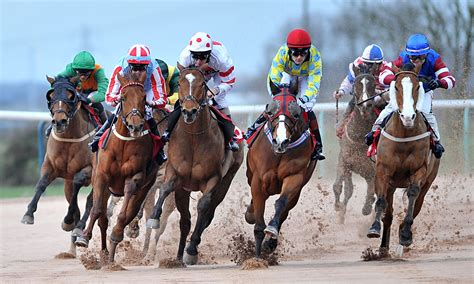 Looking After America's Race Horses