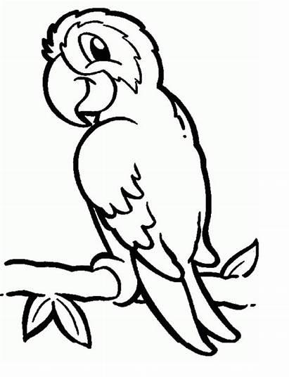 Coloring Parrots Pages Parrot Animal