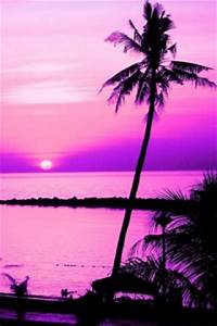 Download Pink Palm Tree Wallpaper Gallery