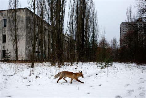 Джаред харрис, стеллан скарсгард, эмили уотсон и др. The Chernobyl Disaster May Have Also Built a Paradise | WIRED
