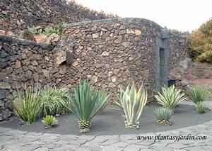 Plantas Crasas o Suculentas Plantas & Jardín