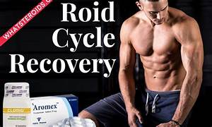 Recovery Of Natural Testosterone After A 12 Week Cycle
