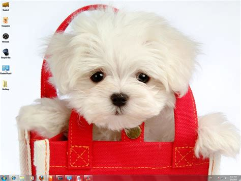 puppy pictures funny pictures cute puppies cute dogs puppy photos pictures puppys