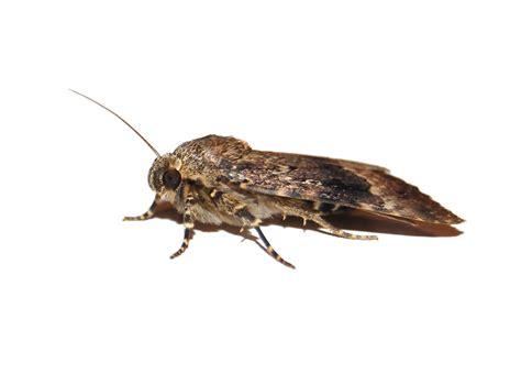 moths test valley pest control overton basingstoke