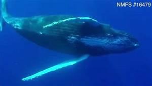 A Whale Penis - Free Hd Tube Porn