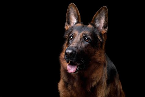 how do dogs see color do dogs see color what colors do dogs see german