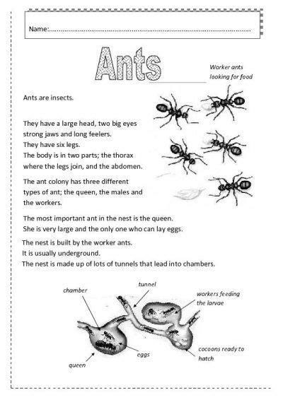 insects worksheets  ants worksheet  esl