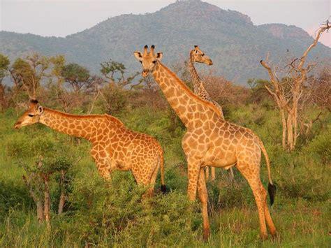 Āfrikas lielākā dabas rezervāts. Top 10 nacionālie parki ...